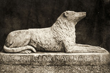 Statue of Maida, Reported to Be Sir Walter Scott's Favourite Dog Photographic Print by William Henry Fox Talbot