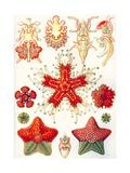 Asteridea 'Kunstformen Der Natur', 1899 Reproduction procédé giclée par Ernst Haeckel