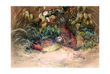 Hardwicke's Spur-Fowl (Galloperdix Lunulata), 1852-54 Giclee Print by Joseph Wolf