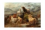 Highland Cattle, 1894 Giclée-tryk af Robert Watson