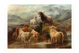 Highland Cattle, 1894 Giclee Print by Robert Watson