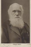 Charles Darwin (1809-1882), English Naturalist Photographic Print