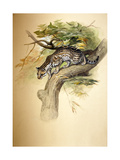 Ocelot, 1851 Giclee Print by Joseph Wolf