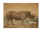 African Rhinoceros Giclee Print by Joseph Wolf