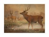 Manchurian Deer Giclee Print by Joseph Wolf