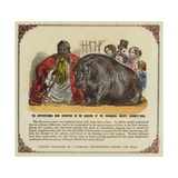 Hippopotamus in the Gardens of the Zoological Society, Regent's Park, London Giclee Print