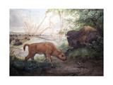 American Bison, 1850 Giclee Print by Joseph Wolf