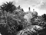 Bagged' - Tiger Hunting in India, C.1870s Photographic Print by Willoughby Wallace Hooper