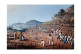 Breaking Up the Land, from 'ten Views in the Island of Antigua', 1823 Giclee Print by William Clark