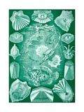 Collection of Teleostei from 'Kunstformen Der Natur', 1899 Giclee Print by Ernst Haeckel