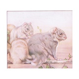 Squirrels, Illustration from 'A Book of Baby Pets', 1930s Giclee Print