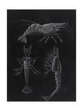 Crustacea Giclee Print by Philip Henry Gosse