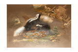 American Skunk Giclee Print by Joseph Wolf
