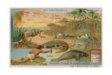 The Creatures of the Lagoon with an Alligator and a Manatee and a Mangrove Tree Giclee Print