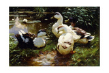 Ducks on a Riverbank Giclee Print by Alexander Koester
