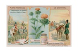 Safflower and its Transportation from Persia Giclee Print