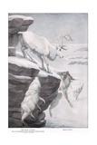 The Peary Caribou Wydruk giclee autor Louis Agassiz Fuertes