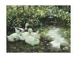 Five Ducks on the River, Stony Shore; Funf Enten Am Bach, Steiniges Ufer Giclee Print by Alexander Koester