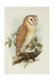 Barn Owl Giclee Print by Henry Constantine Richter