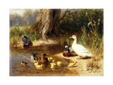Ducks at the Water's Edge, 1874 Giclee Print by Carl Jutz