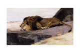 A Resting Lion; Ruhender Lowe Giclee Print by Wilhelm Kuhnert