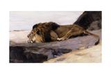 A Resting Lion; Ruhender Lowe Giclee Print by Wilhelm Kuhnert