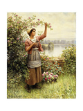 Cutting Roses Along the Seine Giclee Print by Daniel Ridgway Knight
