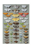 Sixty-Three Moths, Arranged Inthree or Five Irregular Columns Giclee Print by Marian Ellis Rowan