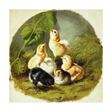 Chicks, 1863 Giclee Print by Arthur Fitzwilliam Tait