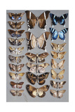 Twenty-Four Moths, in Three Columns, Mostly Belonging to the Family Noctuidae Giclee Print by Marian Ellis Rowan
