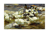 Ducks in the Pond; Enten Im Teich Giclee Print by Alexander Koester