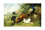 Fowl and Peacocks, 1899 Reproduction procédé giclée par Arthur Fitzwilliam Tait