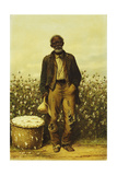 The Old Cotton Picker Giclee Print by William Aiken Walker