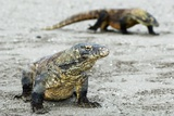 Komodo Dragons on a Beach Papier Photo par Georgette Douwma