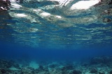 Shallow Reef Photo by Georgette Douwma