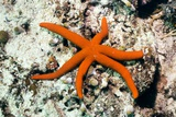 Luzon Starfish Posters by Georgette Douwma