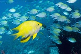 Tropical Reef Fish Photographic Print by Georgette Douwma