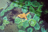 Tide Pool Photographic Print by Georgette Douwma