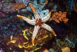 Necklace Starfish Prints by Georgette Douwma