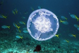 Fish And Jellyfish Over a Coral Reef Photographic Print by Georgette Douwma