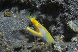 Ribbon Eel Photo by Georgette Douwma