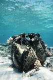 Giant Giant Clam Photographic Print by Georgette Douwma