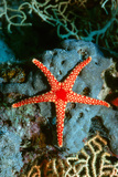 Starfish Photographic Print by Georgette Douwma