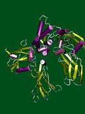 Erythropoietin Hormone Photographic Print by Dr. Tim Evans