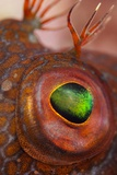 Ringneck Blenny Eye Photographic Print by Angel Fitor