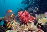Coral Reef, Thailand Photographic Print by Georgette Douwma