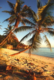 Beach with Palm Trees Print by Peter Falkner