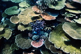 Coral Reef Photographic Print by Georgette Douwma