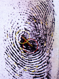Fingerprint Analysis Premium Photographic Print by Mauro Fermariello