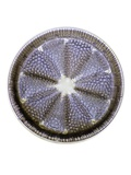 Fossil Diatom, Light Micrograph Photographic Print by Frank Fox
